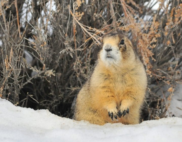 Prairie dog cute animal dark side