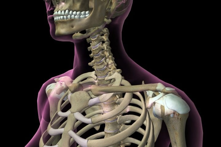Human skeleton anatomy visible through a transparent magenta skin against a black background.