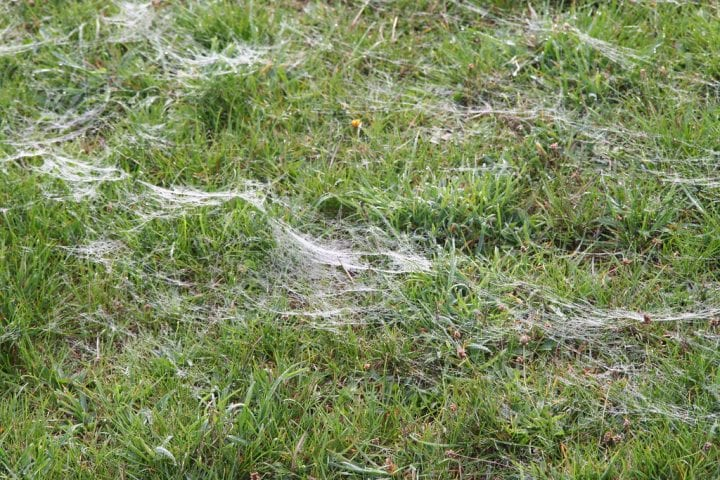 Spider ballooning field creepy place