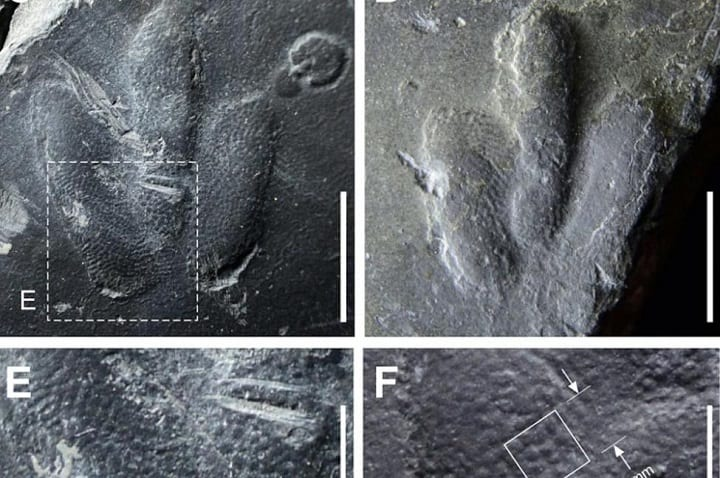 Preserved Dinosaur Skin May Be The Answer To The Mysteries Of The Jurassic Era