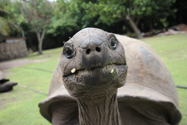 Aldabra tortoise oldest animals