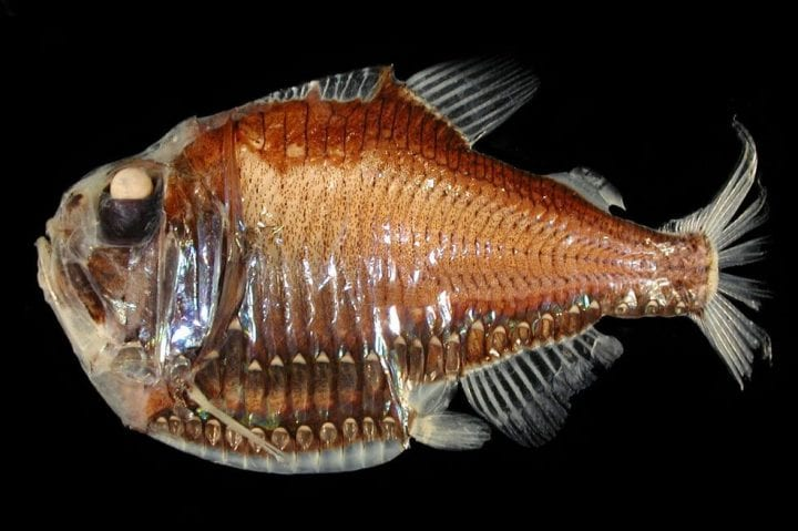 a fish looking like it's about ready to eat