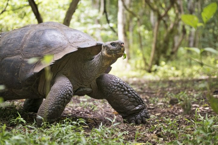Galapagos tortoise oldest animals