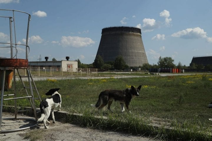 Stray dogs hang out near an abandoned, partially-completed cooling tower at the Chernobyl nuclear power plant on August 18, 2017 near Chornobyl, Ukraine.