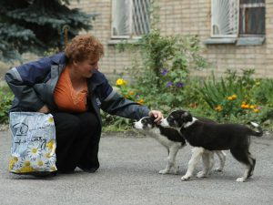 Administration worker Lyudmila Ivanovna greets stray puppies inside the exclusion zone at the Chernobyl nuclear power plant.