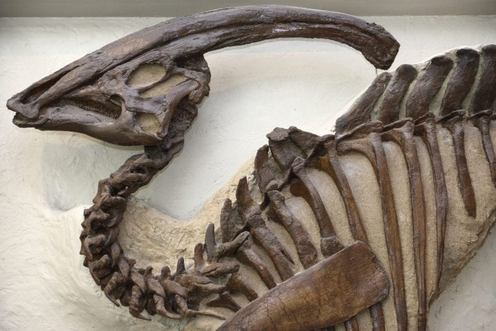 Hadrosaur fossil weird things sent to space