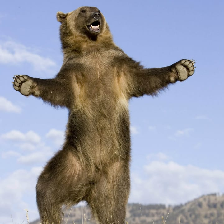 dancing-bear-adorable
