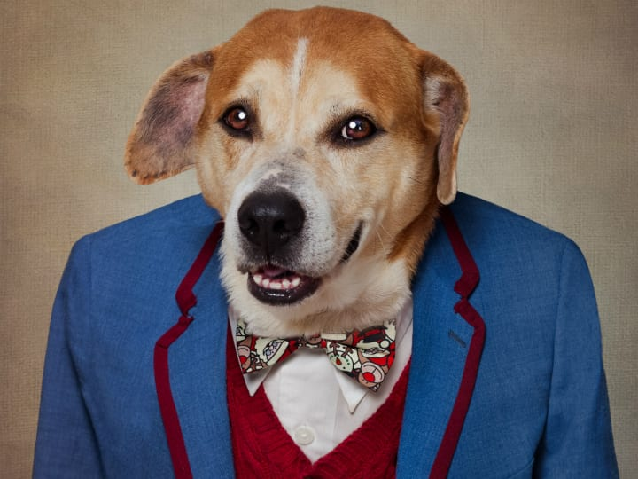 dapper-dog-adorable