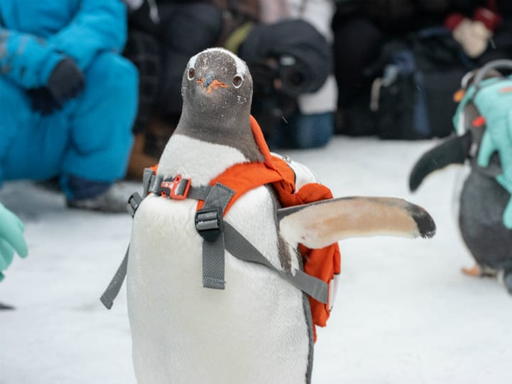 penguin-back-pack