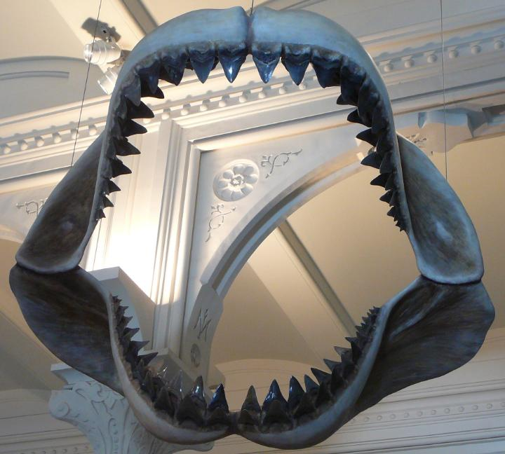 The best place to find your own megalodon tooth