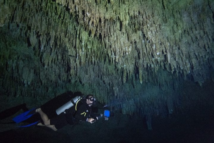 "QUINTANA ROO - SEPTEMBER 27: A scuba diver swims under stalactites in a massive underground, underwater cave in the Cenote Taj Maha in Quintana Roo, Mexico on September 27, 2018. Cenotes are massive sinkholes formed when the ceiling of a limestone cave collapses underwater, creating a network of underwater caverns in crystal clear water that divers come from around the world to explore. In ancient times, cenotes served as the Mayan civilizations only source of water and were also held as being sacred to the Mayan People. They believed that the sinkholes represented a passage to the underworld, or ""Xibalba in the Mayan language. Archaeologists have found fossils of mammoths, massive jaguars, and sloths in these underground cave systems, as well as human bones indicating ritual sacrifice and human presence in the cenotes as far back as 9,000 years ago. ("