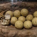 Dinosaur egg models are displayed on May 17, 2019 in Guangzhou,China.