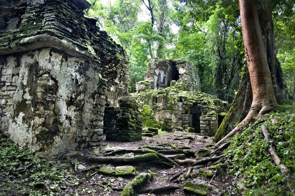 Mayan temple in the middle of the jungleClick here to see more images of mexico: