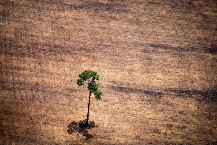 "View of a tree in a deforested area in the middle of the Amazon jungle during an overflight by Greenpeace activists over areas of illegal exploitation of timber, as part of the second stage of the ""The Amazon's Silent Crisis"" report, in the state of Para, Brazil, on October 14, 2014. According to Greenpeace's report, timber trucks carry at night illegally felled trees to sawmills, which then process them and export the wood as if it was from a legal origin to France, Belgium, Sweden and the Netherlands."