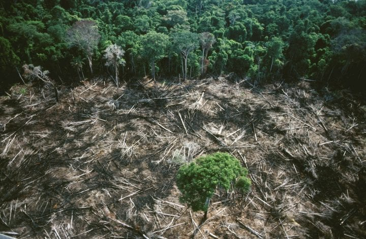 (Original Caption) Clearing the forest destroys for ever the fragile equilibrium of water, mineral and organic matter. The Amazon rainforest is under threat and consequently so is the world's climate balance. (