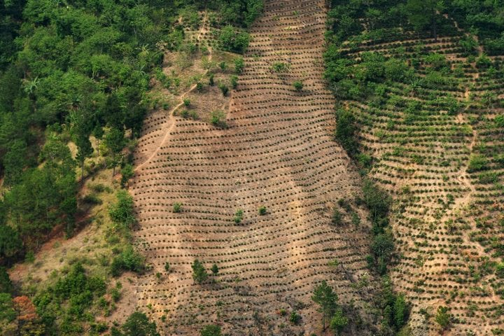 "View of crops and a forest on a hillside damaged by deforestation, pests and prolonged droughts in the La Ceiba Talquezal village in the municipality of Jocotan in eastern Guatemala, on May 5, 2017. The village of La Ceiba Talquezal, home to 114 native Mayan families, is facing malnutrition due to severe drought, part of the impact of climate change in Central America's so-called ""dry corridor"". / AFP PHOTO / Marvin RECINOS (Photo credit should read MARVIN RECINOS/AFP/Getty Images)"
