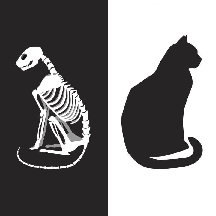 Schrodinger's cat vector illustration. Life and death.