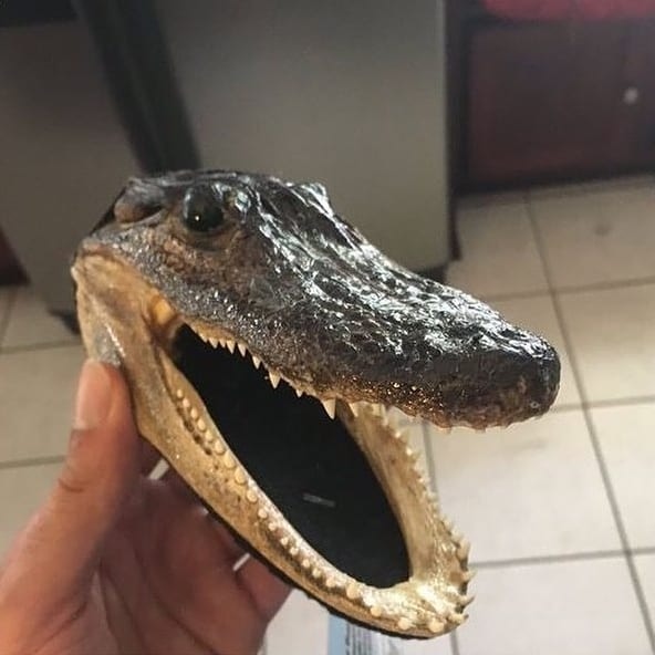 Alligator head, TSA, security, checkpoint