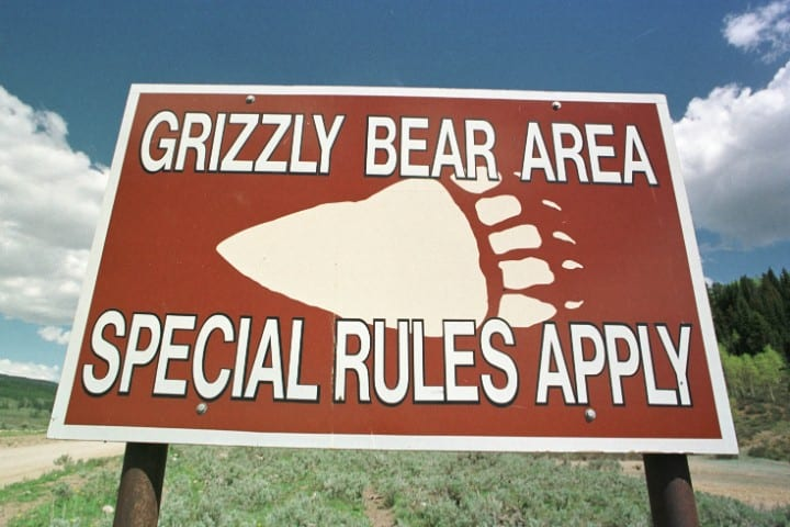 Grizzly Bears, Dangerous natural tourist destinations