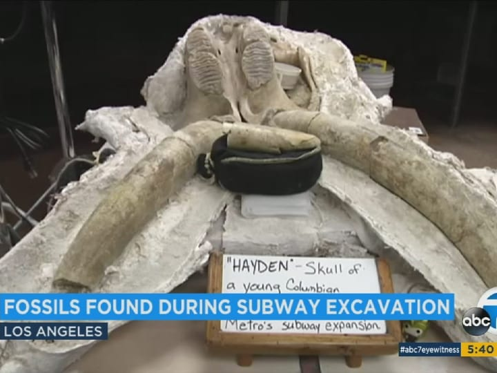 mammoth skull, ice age, fossil, LA subway