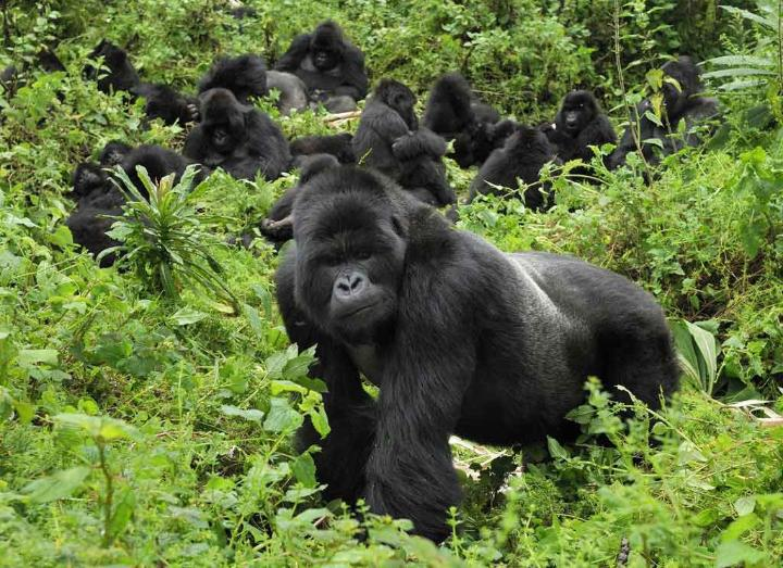 It Turns Out That Gorillas Grieve For The Dead In Some Unexpected Ways