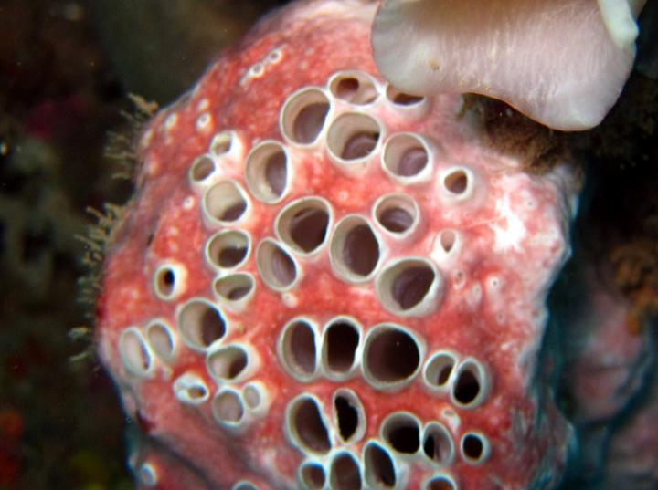 Trypophobia is the crippling fear of holes, right? It's actually way more complicated