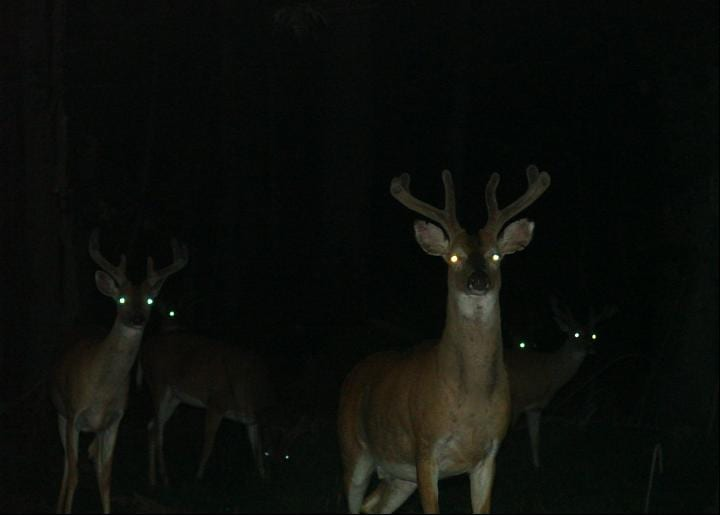 "Could deer ""zombie"" disease spread to people?"