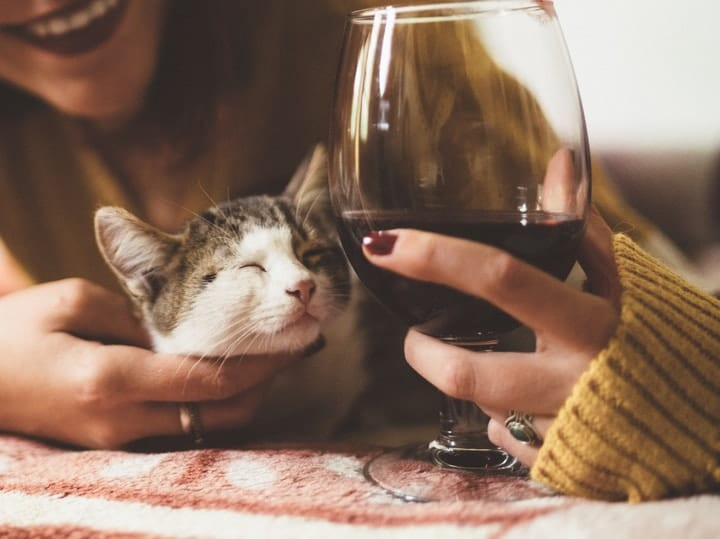 Cat and wine alcohol bad for pets