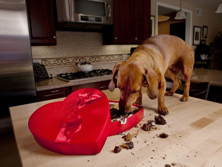 Don't let your pet eat any of these things