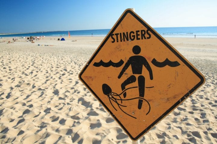 """Jellyfish warning sign, cable beach, western Australia"""