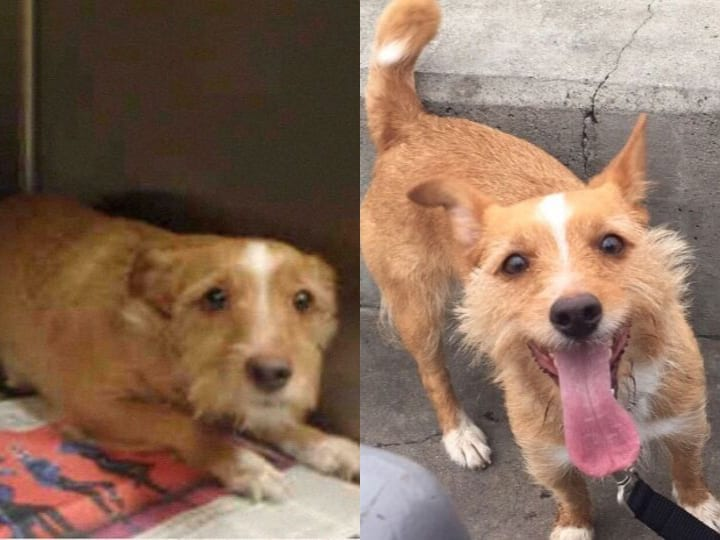 before and after adoption happy dog