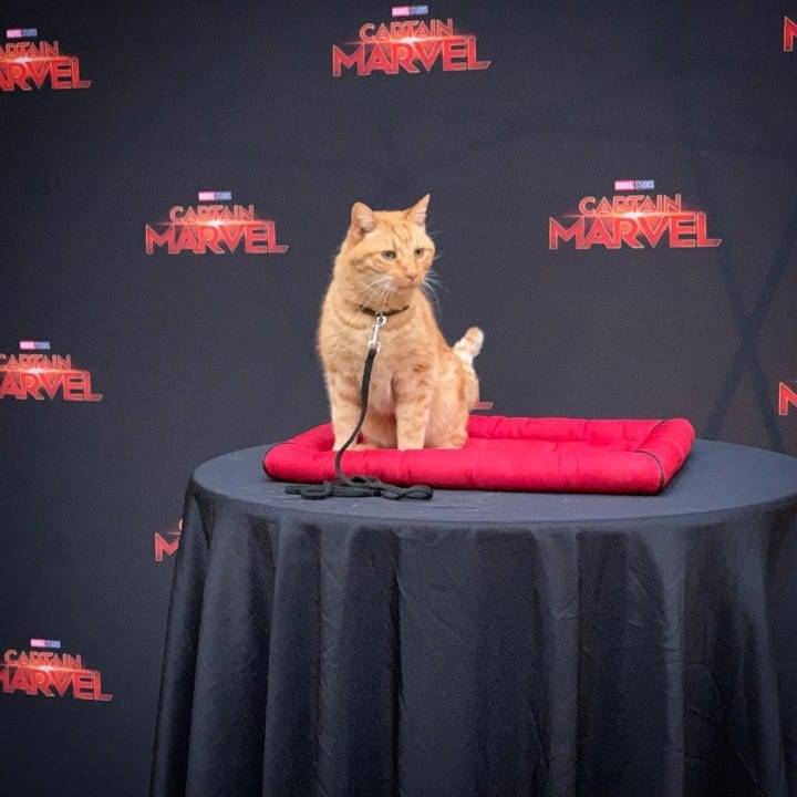 Captain Marvel's Goose
