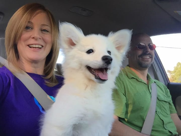 cute fluffy dog smiles in car