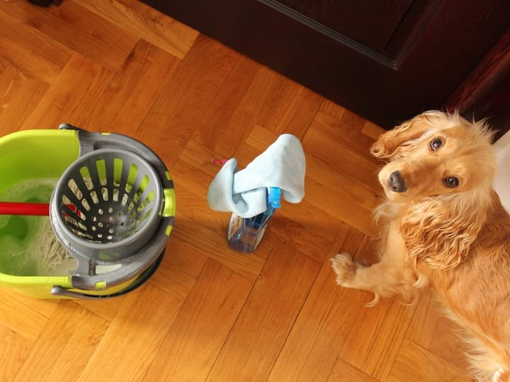 Dog cleaning products toxic