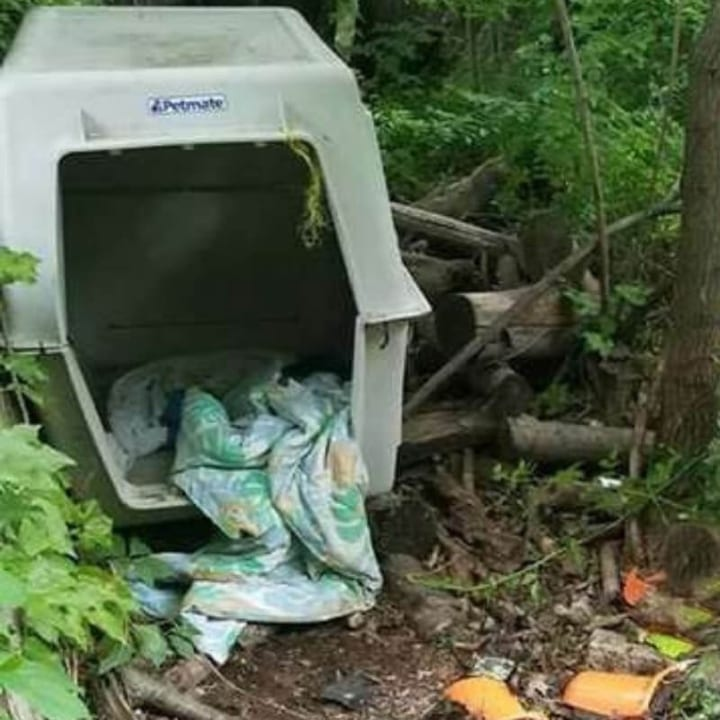 Dog kennel, random cage, out in the woods