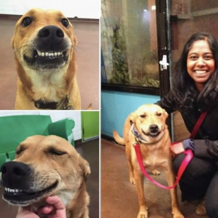 funny dog with underbite adopted