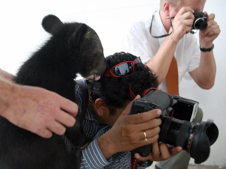 Male bear Rove, 4 months old, climbs on the head of a Cambodian photographer while he is taking pictures, at Phnom Tamao Zoo in Takeo province some 45 kilometers south of Phnom Penh on March 19, 2008. Wildlife conservationists in Cambodia opened Asia's first centre aimed at preserving local bear populations, which are under severe threat from poachers and exotic pet traders. The Bear Discovery Centre hopes to promote awareness of the plight of Asia's bears, said Mary Hutton, chairwoman and founder of the Australia-based Free the Bears Fund Inc