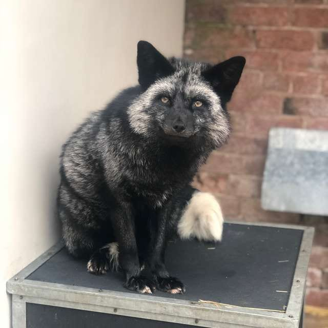 hanging out on box, looking at camera