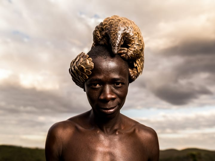 Tikki Hywood Trust pangolin minder Phaliot Nkata, 13th October, 2016. Incredible portraits of a group of men who dedicate their lives to the most trafficked mammal in the world - the pangolin have been released today as part of a campaign to raise awareness and funds for the protection of the species. Committed minders from the The Tikki Hywood Trust in Zimbabwe work hard to protect the species with a one-on-one care programme. The charity workers are assigned with one pangolin each, where they spend 24 hours a day rehabilitating and walking the majestic mammals so that they can forage naturally. Surprising to most, pangolins are one of the worlds most endangered species, with over one million of them killed every year for their scales, meat and blood. Photographer Adrian Steirn travelled to Zimbabwe to capture the men's complete commitment to the cause they serve and bring much needed awareness to the pangolin.