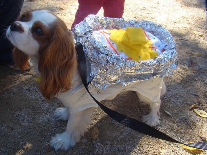 Dog baked potato halloween costume parade