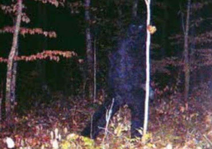 big foot image caught by trail cam