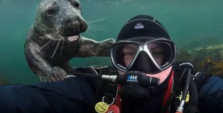 30 of the most adorable animal photobombs