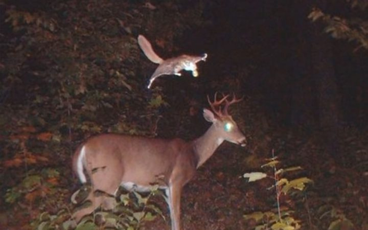 Here are the craziest things ever caught on trail cams