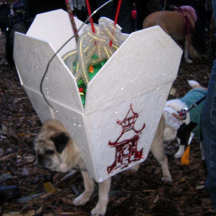 Dog Halloween costume parade
