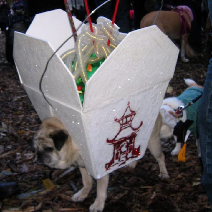 Chinese takeout dog halloween costume