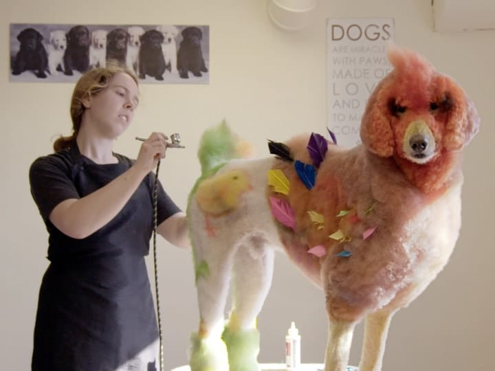 Dog grooming creative competition