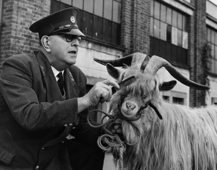 5th February 1962: 'Taffy' the white goat, the mascot of the 5th Battalion Welsh Regiment is with Head Keeper of London Zoo, Sam Smith on the Mappin Terrace. (Photo by Keystone/Getty Images)