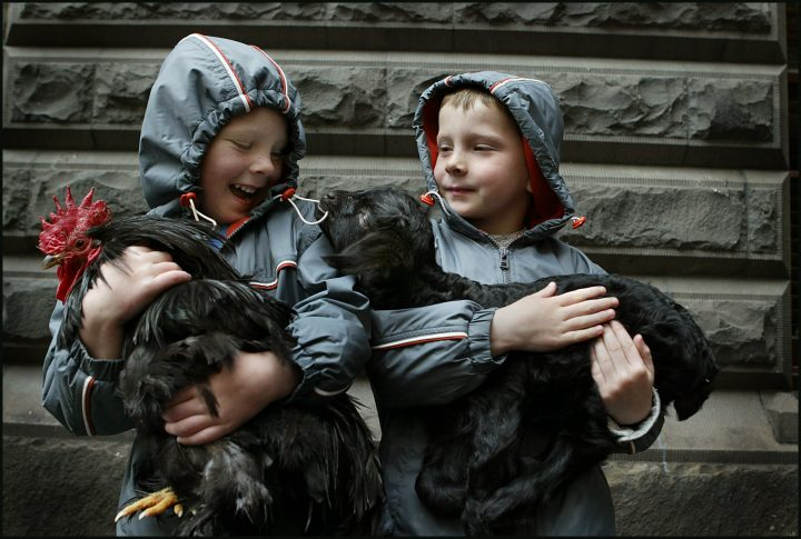 (AUSTRALIA OUT) Brothers, Myles (left), 3, and Heath Lawrence, 5, get to know Frankie the goat and Poppie the rooster who were at the Town Hall forecourt as a foretaste of the show on 12th September, 2005. THE AGE NEWS Picture by SANDY SCHELTEMA. Pic Sandy Scheltema.050912.001.001 (Photo by Fairfax Media via Getty Images/Fairfax Media via Getty Images via Getty Images)