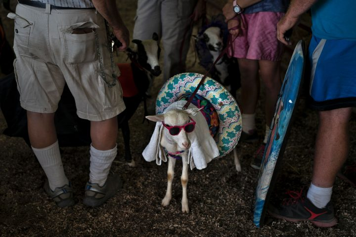"TOPSHOT - People wait to compete in ""the prettiest animal"" contest during the Shenandoah County Fair September 2, 2016 in Woodstock, Virginia. / AFP PHOTO / Brendan Smialowski (Photo credit should read BRENDAN SMIALOWSKI/AFP/Getty Images)"