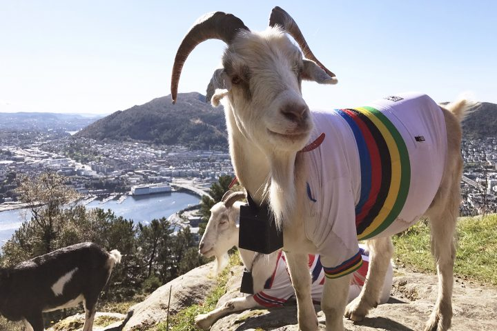 Cycling: 90th Road World Championships 2017 / Opening ceremony Landscape / Goat World Champion Jersey / Bergen City / Opening ceremony / Torgallmenningen / Bergen / RWC / (Photo by Tim de Waele/Corbis via Getty Images)